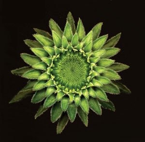 Echinacea Bud,  The Great Indoors, scanner