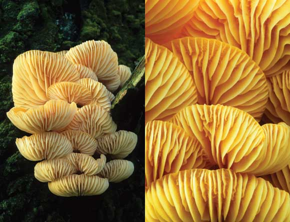 WDC Top 12 Tips for Macro Photography - Fungi