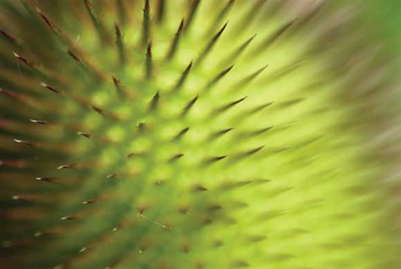 WDC Top 12 Tips for Macro Photography - Teasle Head
