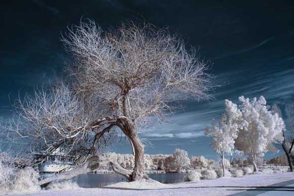How To Shoot Infrared - How to Shoot Infrared Photos