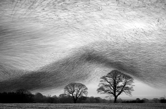 Danny Green - Nature in Black and White Winner