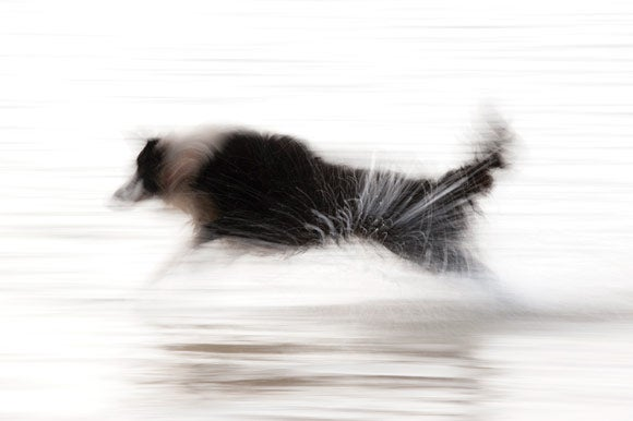 How To Shoot... Motion Pictures - Panning dog