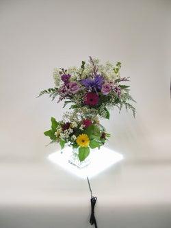 Lite Pad Flowers