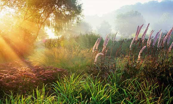 2010 International Garden Photographer of the Year  - Marianne 