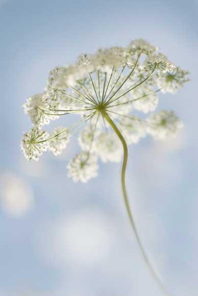 2010 International Garden Photographer of the Year  - Carol Sharp