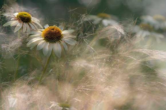 2010 International Garden Photographer of the Year  - Jacky Parker