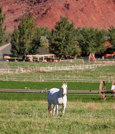 Horse remove 1