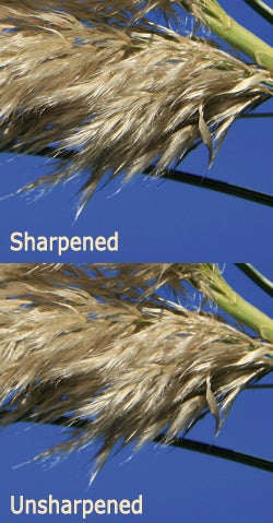 Sharpened vs unsharpened
