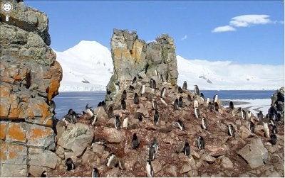 Antarctic Google Street View