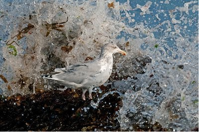 Image of the Day: British Wildlife Photography Awards