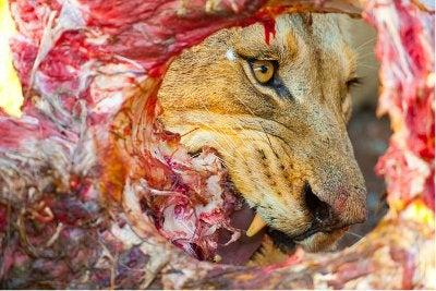 © Juergen Ross/ Veolia Environnement Wildlife Photographer of the Year 2010