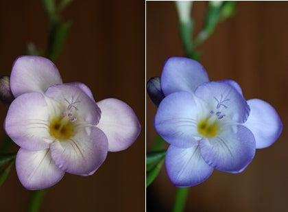 Sigma_vs_Nikon_Macros.jpg