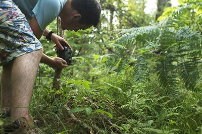 ALDI Maginon Wildlife Camera in the wild