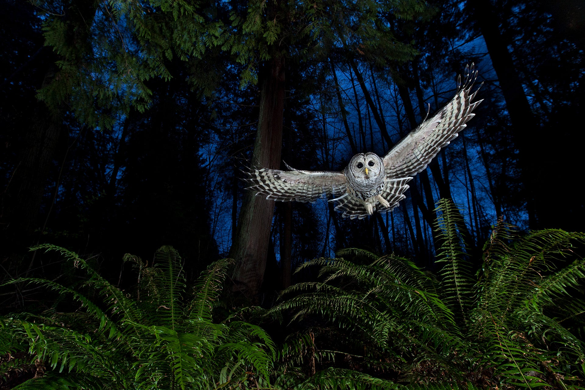 Natural History Museum Wildlife Photography Competition