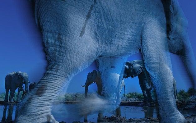 Greg du Toit: Essence of elephants